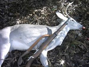 Rick_youngs_blue_deer_2