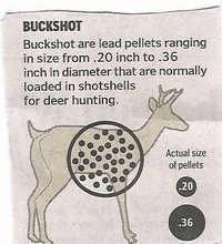 Buck_shot