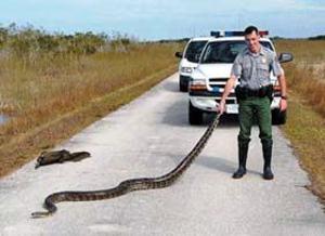 Snakespython