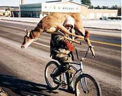 Deerbike1