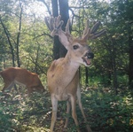 Trail_cam_giant_tx_2