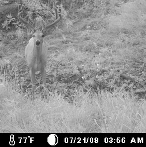 Pat_west_cam_whitetail