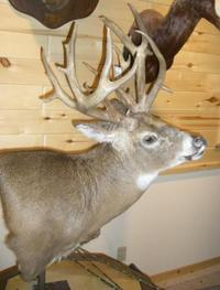 Greg_b_2007_buck_mount